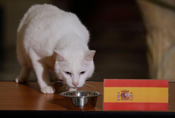 Кот Ахилл, проживающий в Эрмитаже в Санкт-Петербурге, выбирает Испанию, пытаясь предсказать результат четвертьфинального матча Евро-2020 между Швейцарией и Испанией. - Sputnik Узбекистан