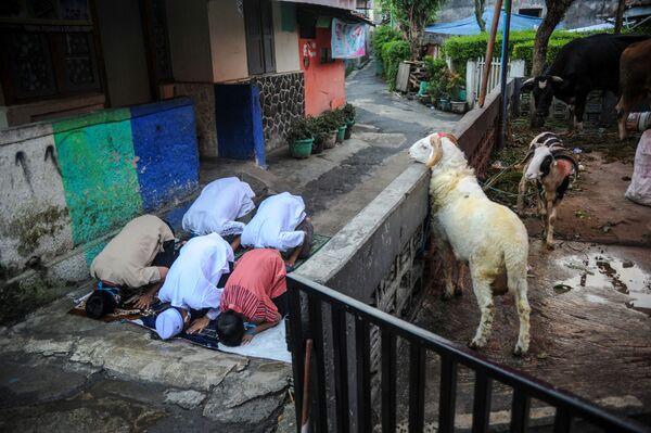 Индонезийские мусульмане совершают молитву в честь праздника Курбан-байрам на улице на фоне всплеска случаев заболевания коронавирусной инфекции в Бандунге, провинция Западная Ява, Индонезия. - Sputnik Узбекистан