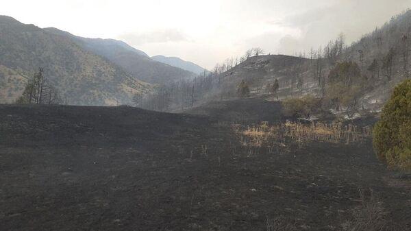 Пожар в лесных угодьях Зааминского района ликвидирован - Sputnik Ўзбекистон