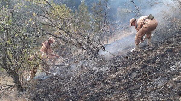 Пожар, возникший в лесных угодьях Зааминского района, потушен - Sputnik Узбекистан