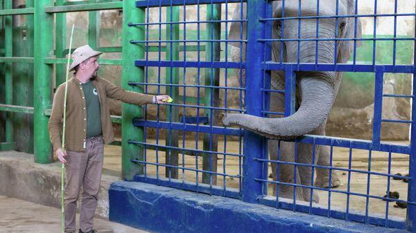 В Ташкентском зоопарке немецкий специалист дал серию мастер-классов по уходу за слонами - Sputnik Узбекистан
