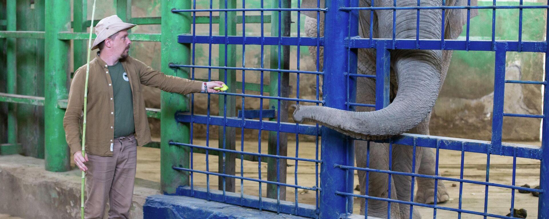 В Ташкентском зоопарке немецкий специалист дал серию мастер-классов по уходу за слонами - Sputnik Узбекистан, 1920, 08.09.2021