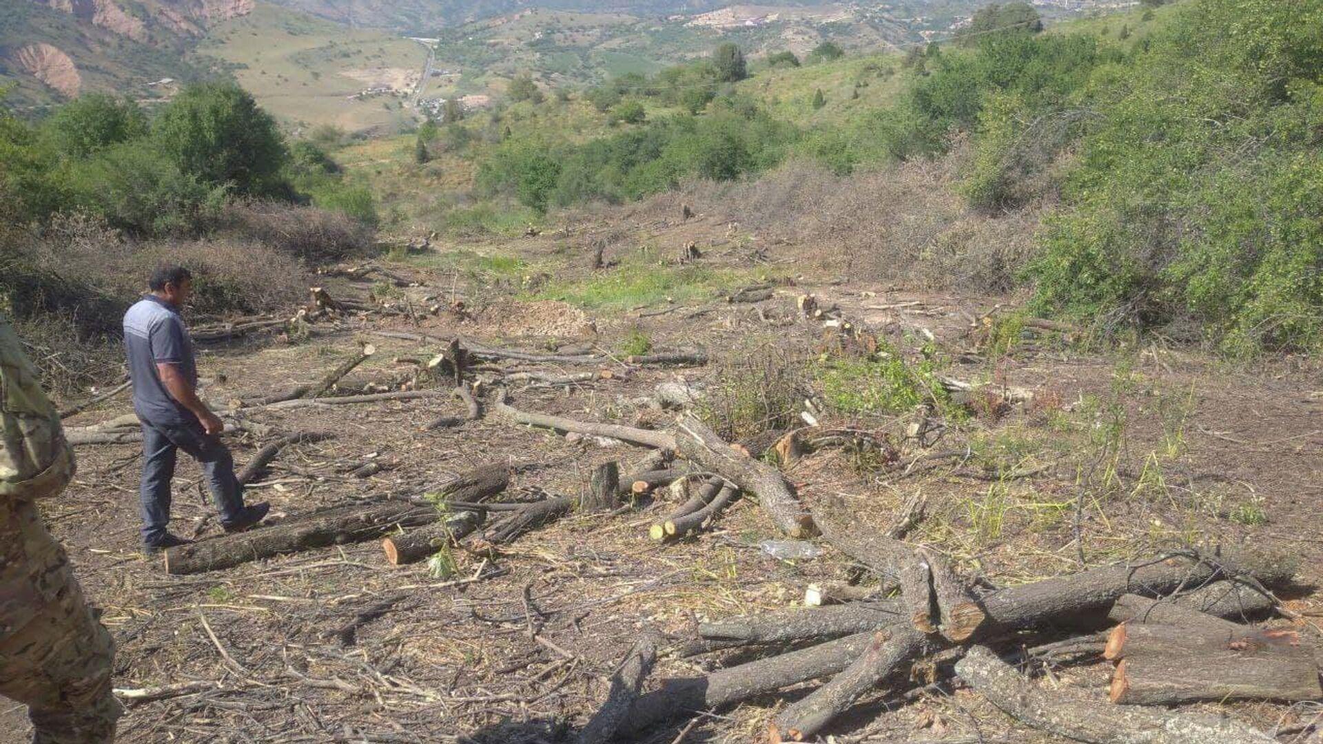 Вырубка деревьев в курортной зоне Амирсай под Ташкентом  - Sputnik Узбекистан, 1920, 14.09.2021