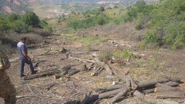 Вырубка деревьев в курортной зоне Амирсай под Ташкентом  - Sputnik Узбекистан