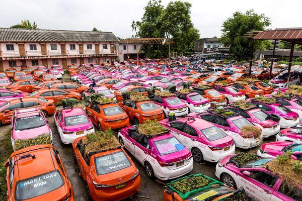 Бангкокдаги сабзавот боғлари. Пандемия туфайли такси хизматлари инқирозга учради. - Sputnik Ўзбекистон