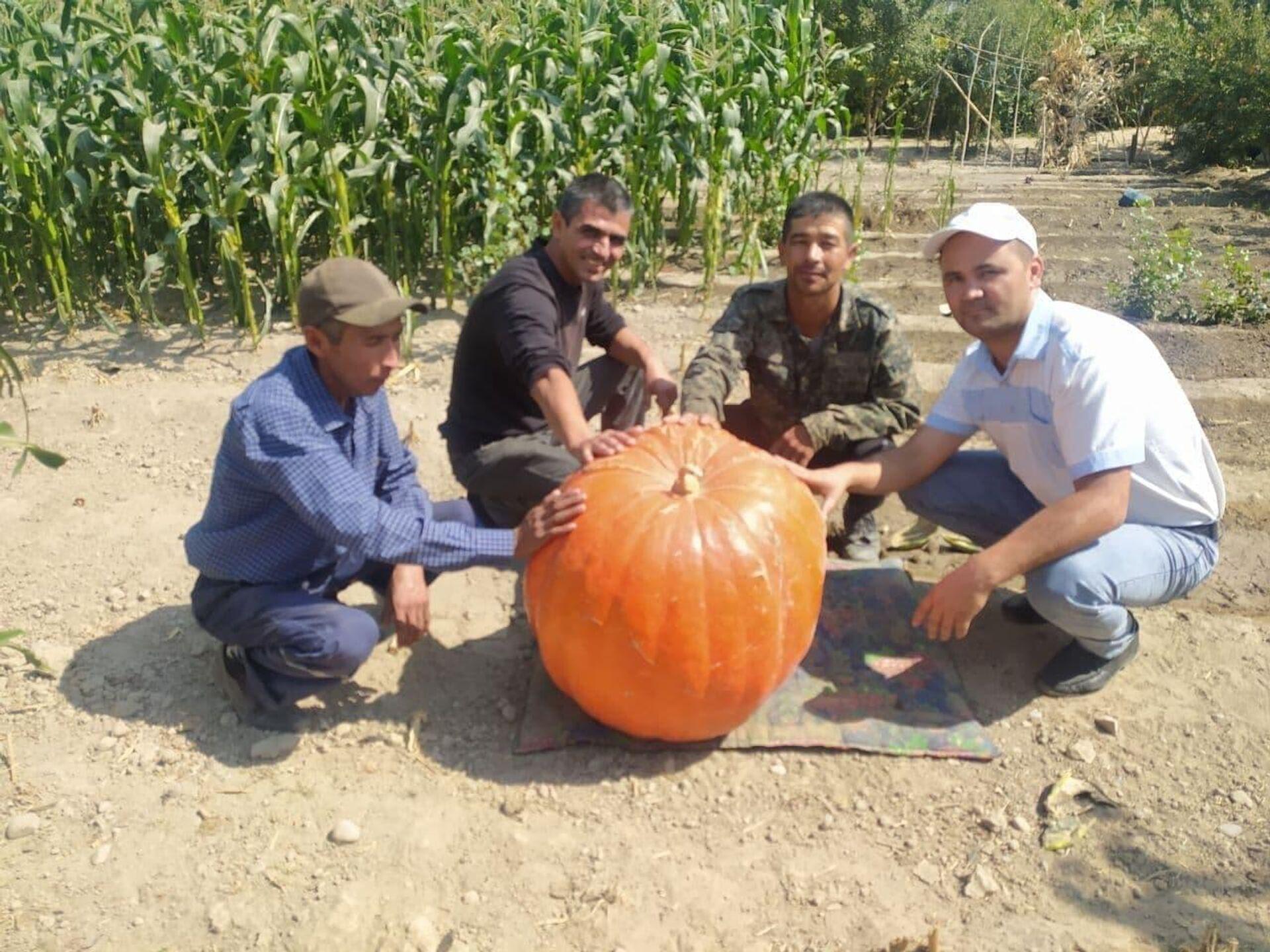 В Наманганской области фермеры вырастили большую тыкву - Sputnik Узбекистан, 1920, 24.09.2021