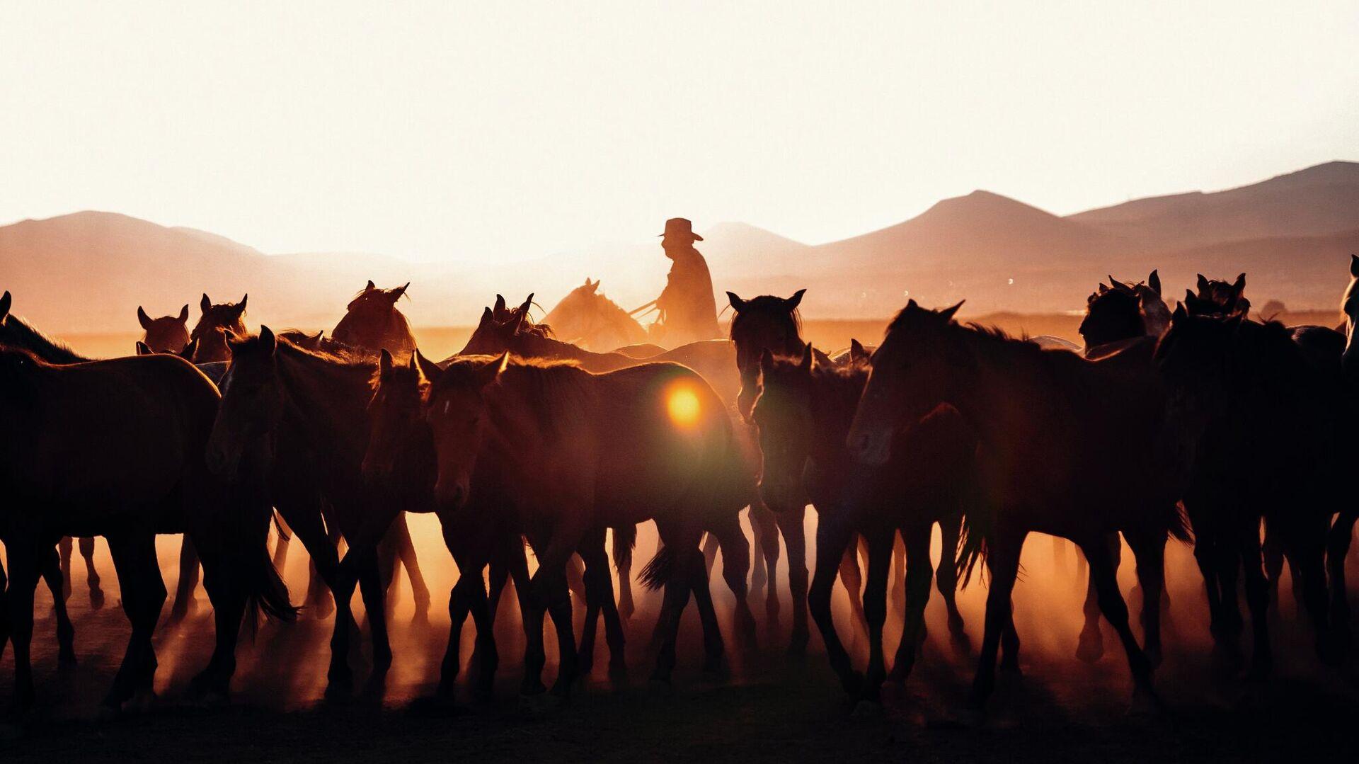 Табун лошадей - Sputnik Узбекистан, 1920, 01.10.2021