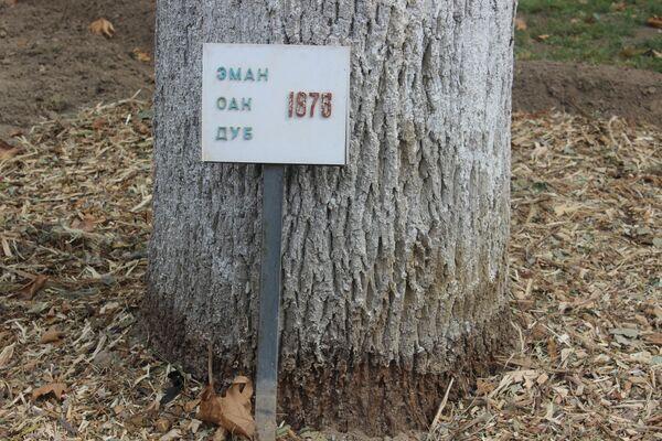 В саду дворца растут дубы, каштаны, платаны восточные. Их посадили более 150 лет назад. - Sputnik Узбекистан