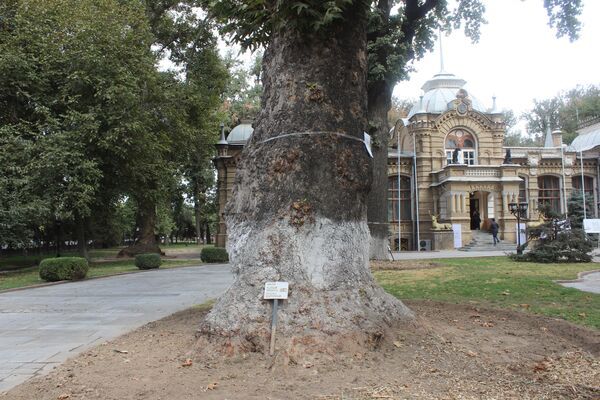 Все деревья во дворе особняка пронумерованы. И каждое из них находится под охраной Минкультуры. - Sputnik Узбекистан