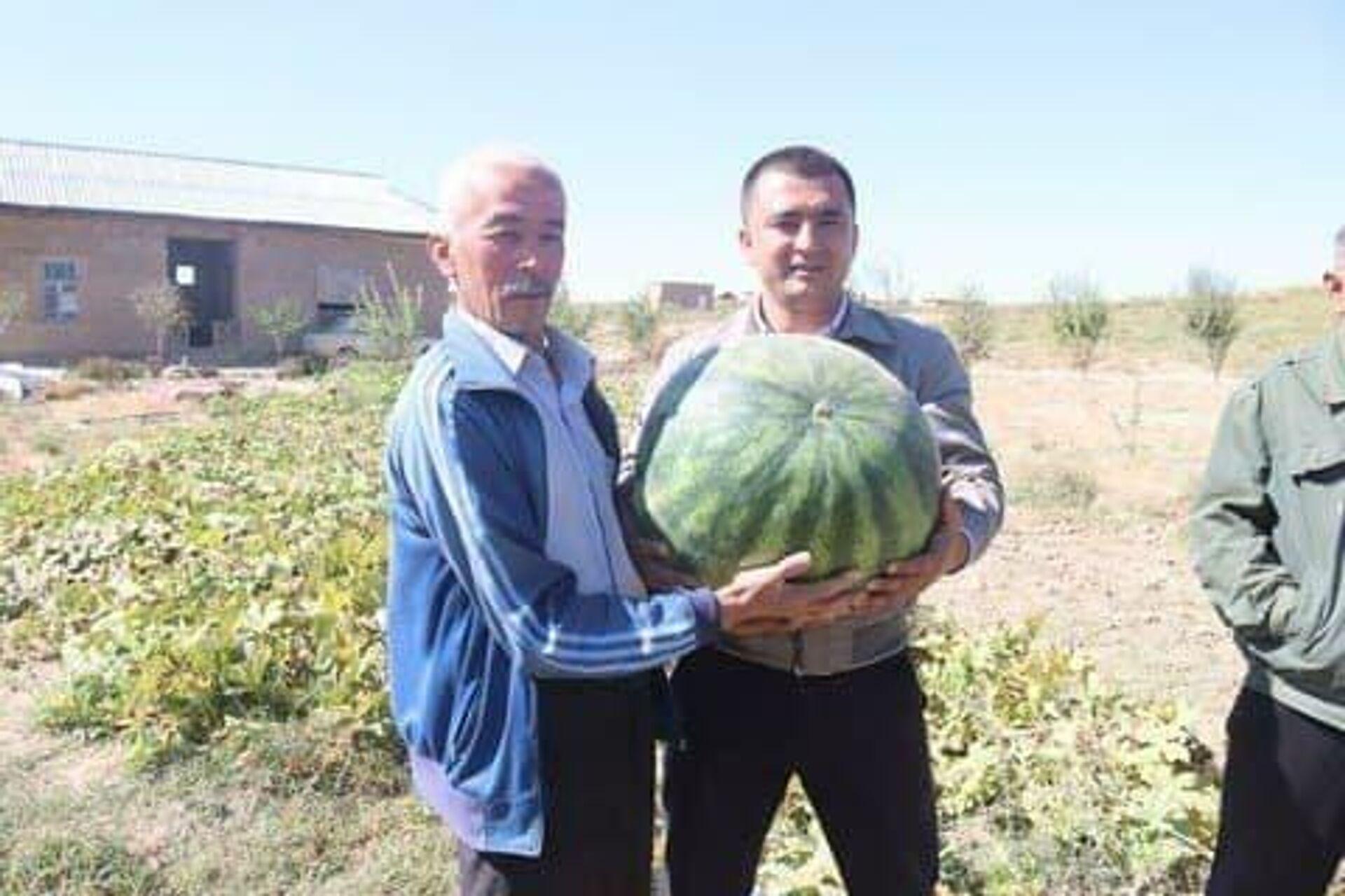 В Самарканде фермеры выращивают крупные арбузы - Sputnik Узбекистан, 1920, 05.10.2021
