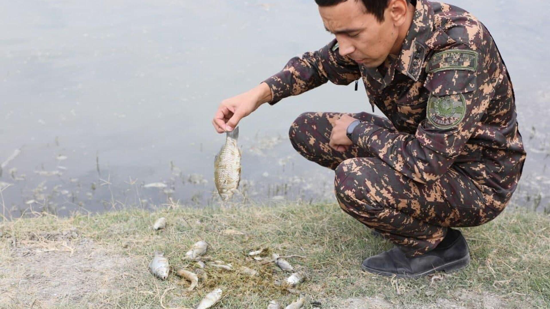Массовый замор рыбы произошел на участке реки Зарафшан - Sputnik Ўзбекистон, 1920, 09.10.2021
