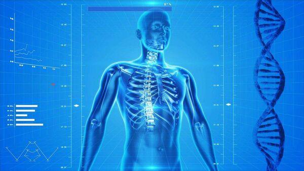 Скелет человека - Sputnik Узбекистан