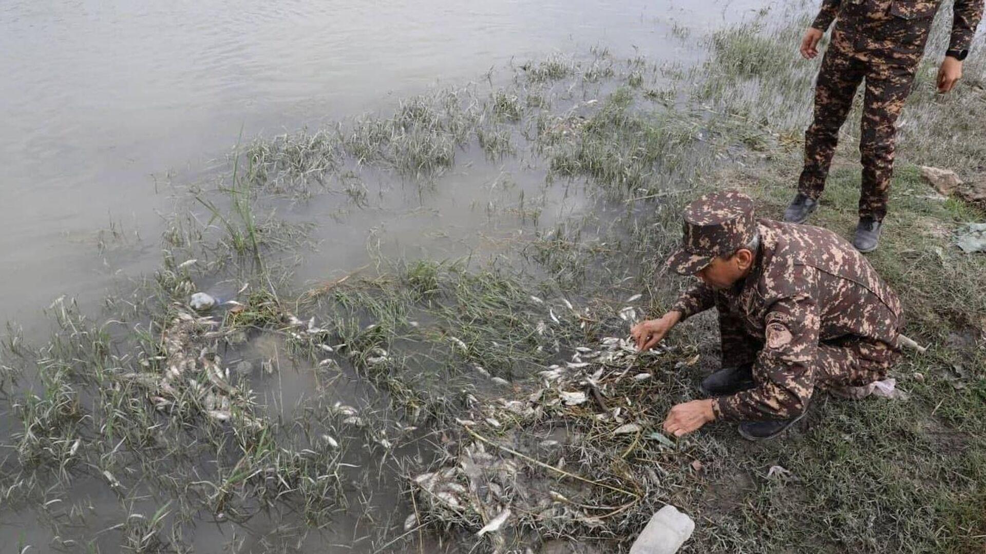 Массовый замор рыбы произошел на участке реки Зарафшан - Sputnik Ўзбекистон, 1920, 10.10.2021