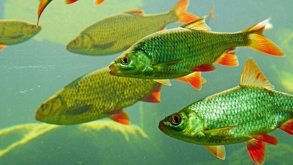 Рыбы, иллюстративное фото - Sputnik Узбекистан