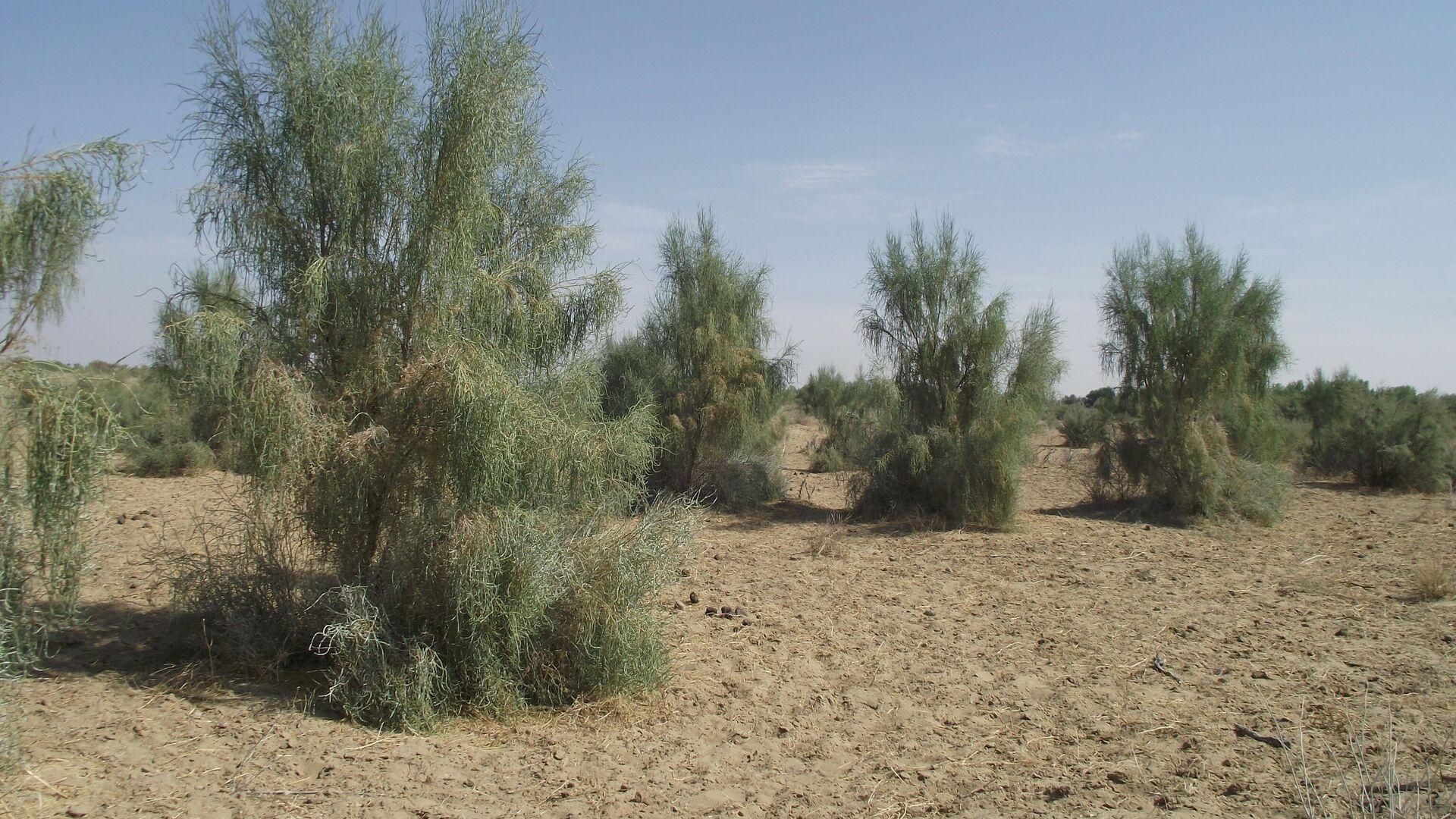 В Узбекистане может появится новая пустыня - Sputnik Узбекистан, 1920, 11.10.2021