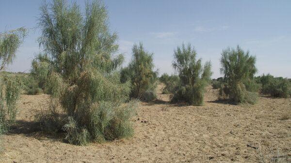 В Узбекистане может появится новая пустыня - Sputnik Узбекистан