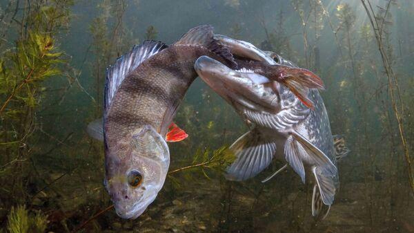 Snimok sudaka cheshskogo fotografa Viktor Vrbovsky, zanyavshiy 3 mesto v kategorii Wildlife konkursa The Nature Conservancy 2021  - Sputnik Oʻzbekiston