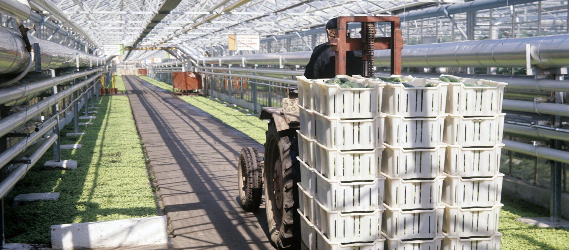 Выращивание овощей в совхозе-комбинате - Sputnik Узбекистан, 1920, 30.08.2020