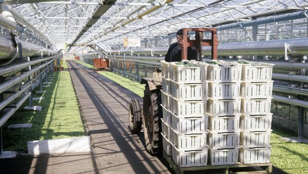 Выращивание овощей в совхозе-комбинате - Sputnik Узбекистан