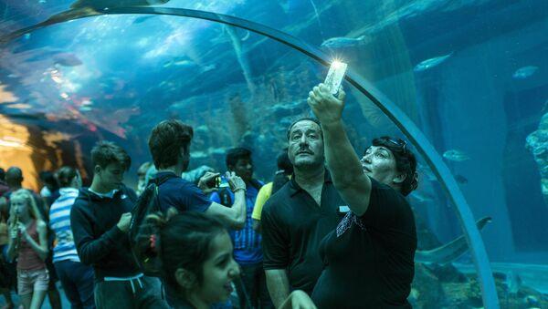Дубайский Океанариум и подводный зоопарк - Sputnik Ўзбекистон