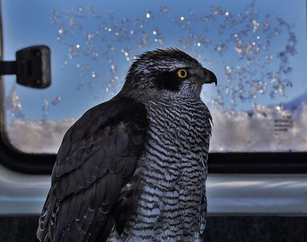 Чемпионат Азии по охоте с ловчими птицами в Алматы - Sputnik Узбекистан
