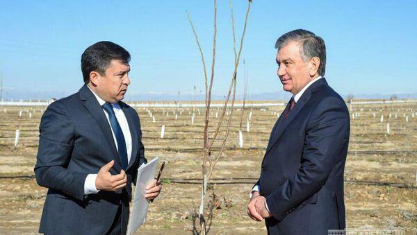 Президент Шавкат Мирзиёев посетил ореховые и миндальные плантации, создаваемые обществом с ограниченной ответственностью Sag agro Yakkabog Яккабагского района - Sputnik Узбекистан