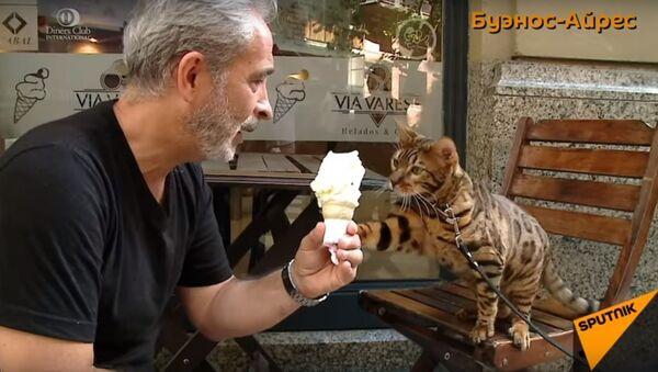 Домашний ягуар стал знаменитостью в Буэнос-Айресе - Sputnik Узбекистан