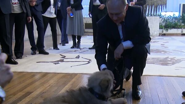 Путину в Сербии подарили щенка - Sputnik Ўзбекистон