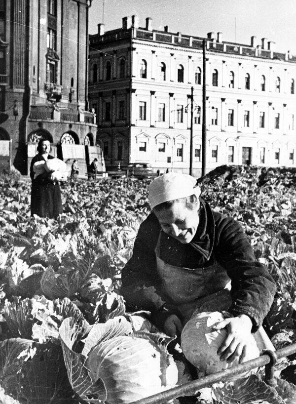 Огород на Исаакиевской площади - Sputnik Узбекистан