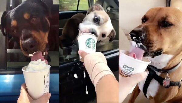 Паппучино: бариста в США подает собакам напиток прямо из окна - Sputnik Узбекистан