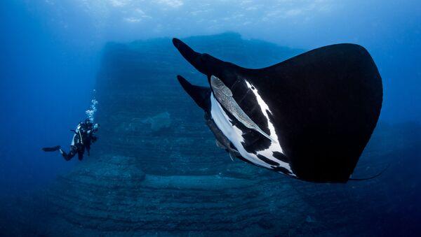 Gigantskiy morskoy dyavol na snimke Special Encounter, zanyavshiy 1-ye mesto v kategorii Novice DSLR fotokonkursa 7th Annual Ocean Art Underwater Photo Contest - Sputnik Oʻzbekiston