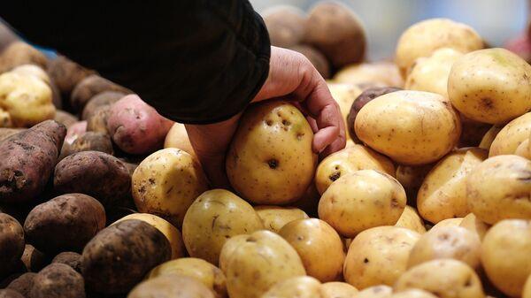 Картофель - Sputnik Узбекистан