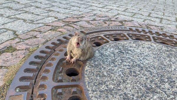 Восемь пожарных и одна пухлая крыса: спасательная операция в Германии - видео - Sputnik Ўзбекистон