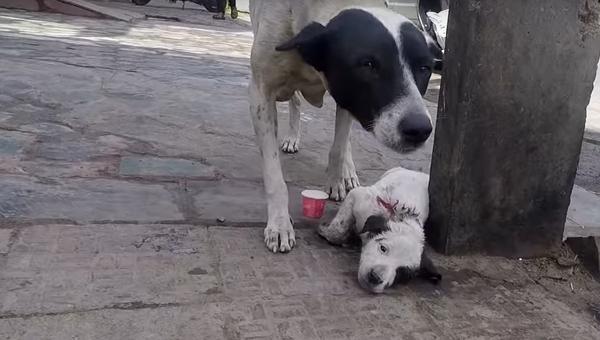 Мамы они такие: собака зовет людей на помощь, чтобы те спасли ее щенка - видео - Sputnik Узбекистан