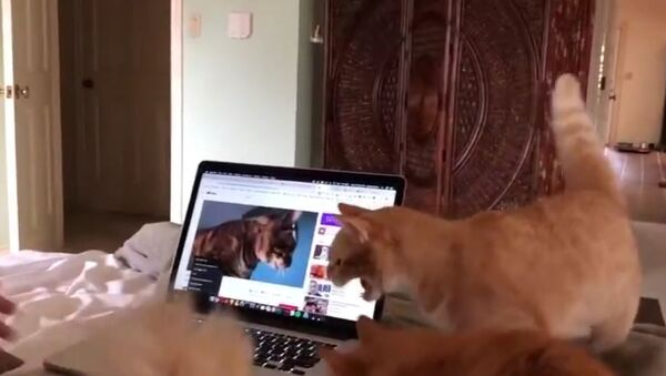 Кошки сходят с ума от автотюна - смешное видео - Sputnik Узбекистан