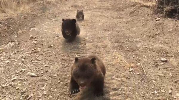 Утро в лесу: трех медвежат-сирот впервые выпустили на прогулку - Sputnik Ўзбекистон