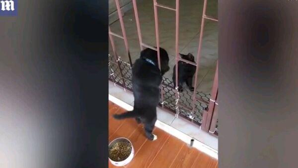 Кот помогает пухлому щенку выбраться из клетки - милое видео - Sputnik Узбекистан
