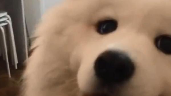 Когда пес похищает сердце твоей девушки - трогательное видео - Sputnik Узбекистан
