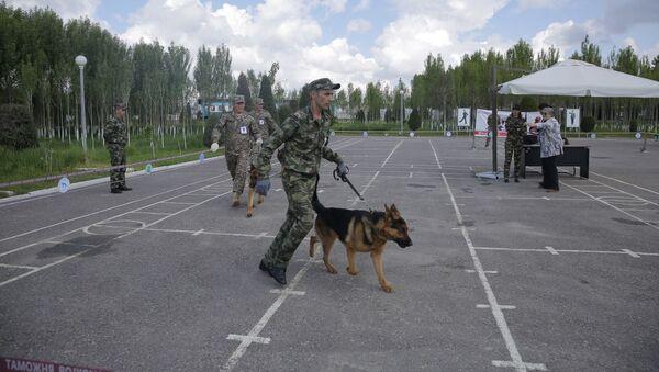 Национальная межведомственная выставка Служебная собака-2019 - Sputnik Ўзбекистон