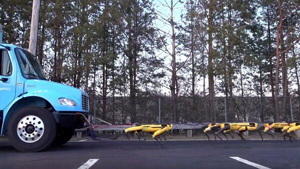 Робособаки, похожие на дроидов, буксируют грузовик - видео - Sputnik Узбекистан