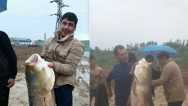 Mujchina derjit rыbu, poymannuyu na Tashmore - Sputnik Oʻzbekiston