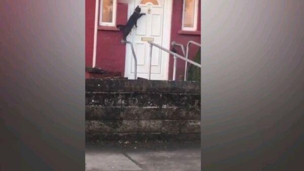 Когда перед тобой закрыты двери - видео с очень воспитанным котом - Sputnik Узбекистан