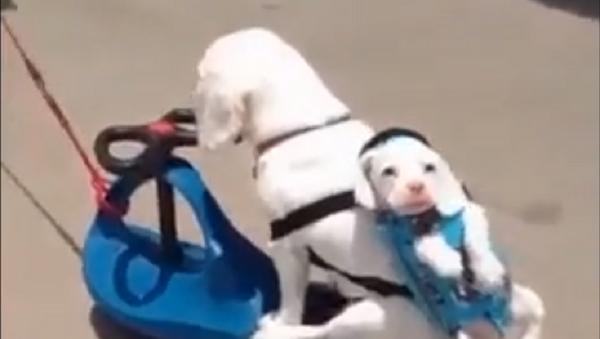 Пушистый прицеп: собаки устроили настоящий автопробег - видео - Sputnik Узбекистан