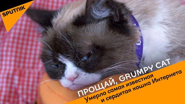СПУТНИК_Прощай, Grumpy Cat - Sputnik Узбекистан