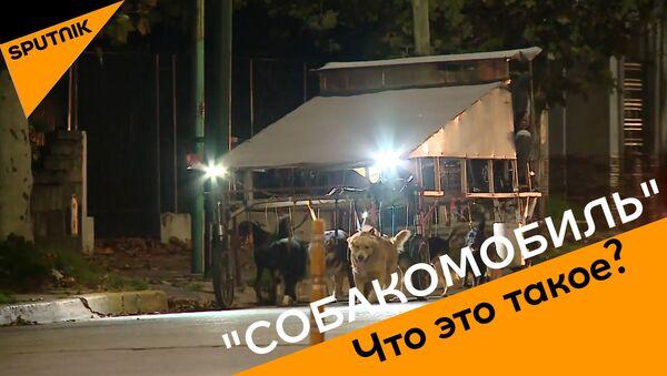 Собакомобиль: как заработать много денег за один вечер - видео - Sputnik Узбекистан