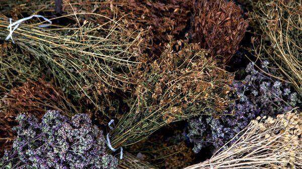 Лечебные травы - Sputnik Ўзбекистон