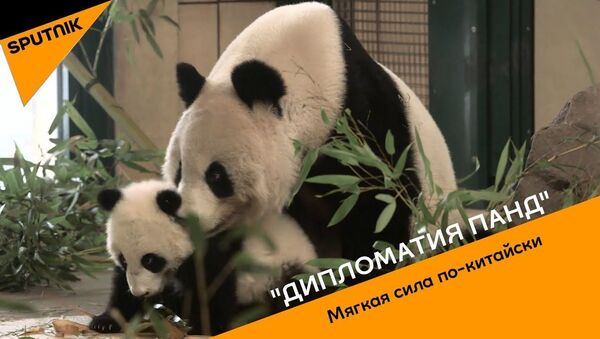 Дипломатия панд. Мягкая сила по-китайски - Sputnik Узбекистан