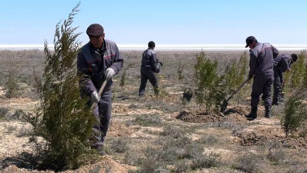 Посадка леса на высохшем дне Арала - Sputnik Ўзбекистон