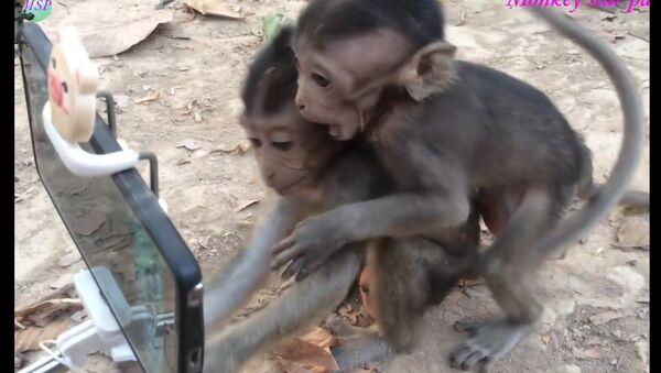 Вот и обезьяны уже научились пользоваться смартфоном - Sputnik Ўзбекистон