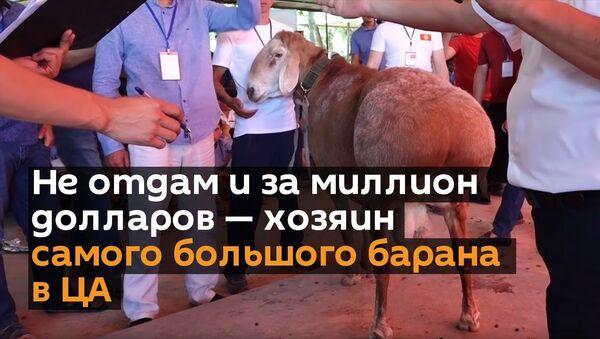 Не отдам его и за миллион долларов — хозяин самого большого барана в ЦА - Sputnik Ўзбекистон
